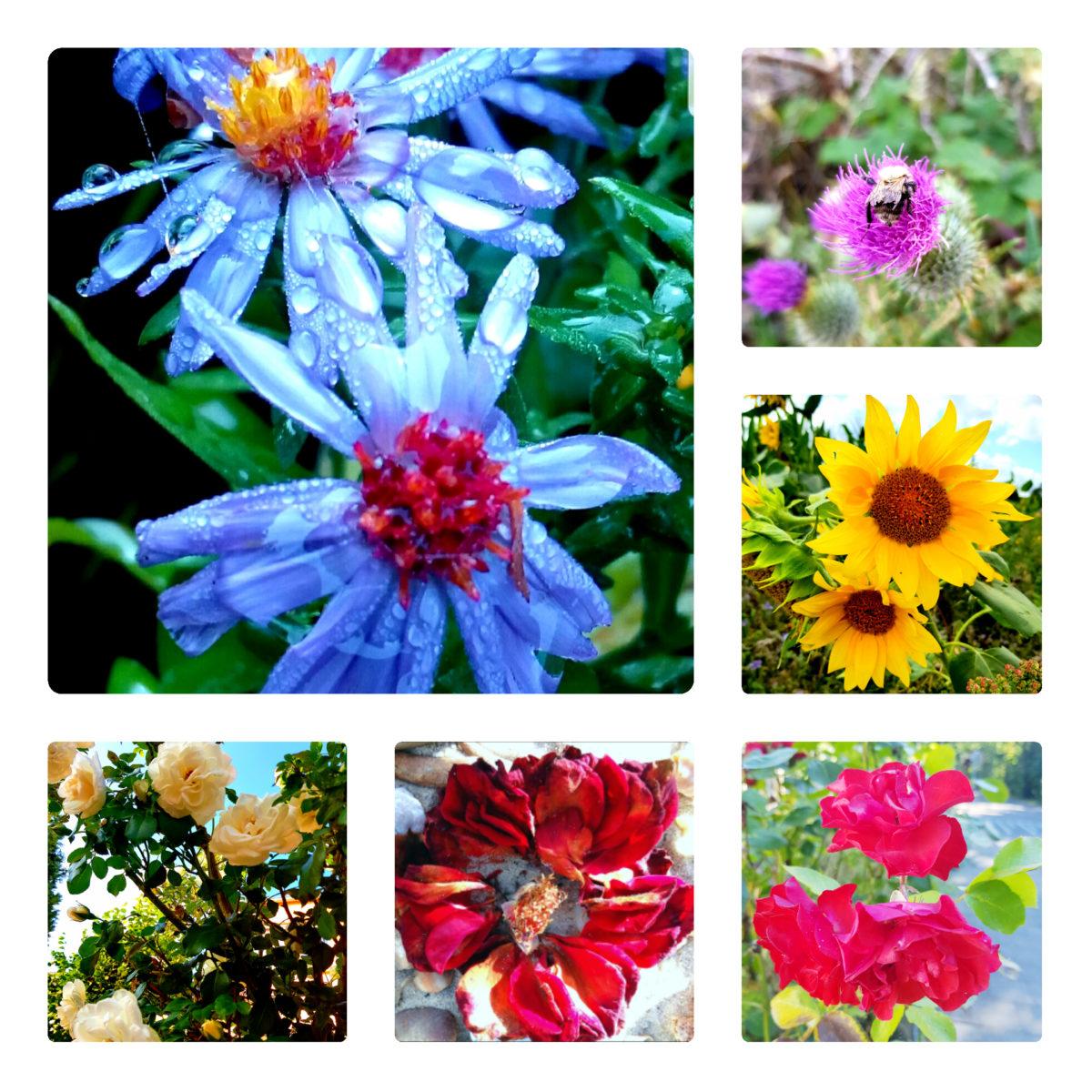 Blumen Collage-schöne Blüten- Sonnenblume-Hummel-Insekten-Rosen