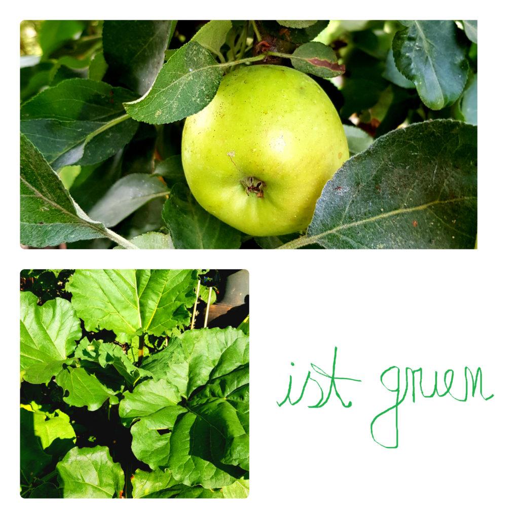Apfel-Rhabarber-Garten-Bio-Anbau