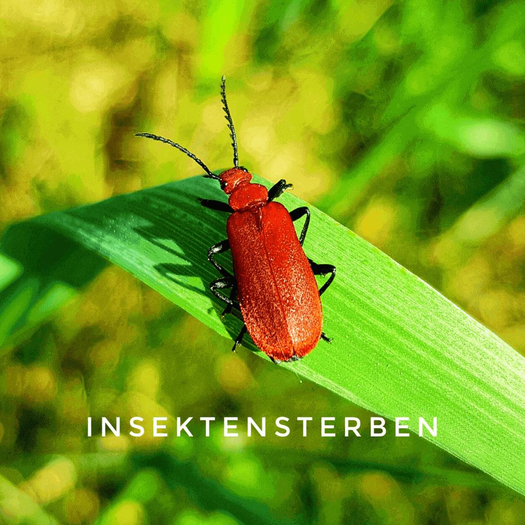 Insektensterben